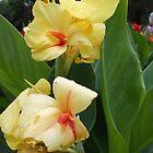 Yellow Flower by Harsha Bhuyan