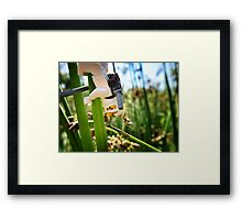 Training in the grass (2 of 3) Framed Print