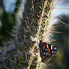 Butterfly on Cactus by Rob Chiarolli