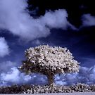 The infrared tree 2 by Gary Power