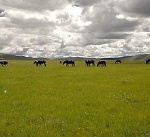 Horses by Sickee