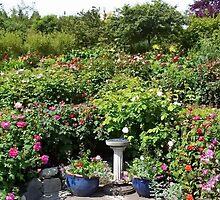 Butchart Gardens Rose Garden by AnnDixon