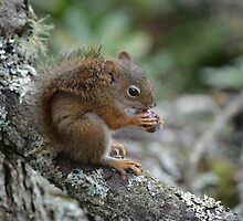 Squirrel by Chantel Riha