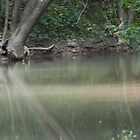 Troublesome Creek 6 by jheflinphotos
