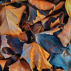 Sometimes dried leaves are just dried leaves (or why a caption is not always beneficial) by rob castro