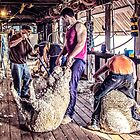 Woolshed Calendar 9 by Candice84