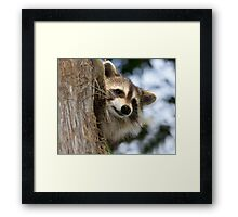 young raccoon 3 2012 Framed Print