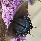 Battered Butterfly by Sue Baumgardner