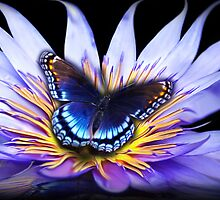 Water lily Butterfly by Cliff Vestergaard