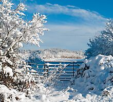 Winter Countryside 1 by Nick Jenkins