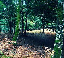 Forest 5 by Furiarossa