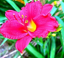 hot pink lily by LoreLeft27