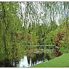 Spring willow tree by the pond. Beautiful Van Dusen Garden  by naturematters