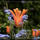 Beautiful orange and purple garden flowers. Floral photography. by naturematters