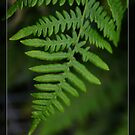 Green fern leaves. Floral photography. by naturematters