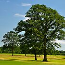 Golf Course View at Carton House, Maynooth. by Orla Cahill Photography