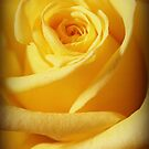 Mellow Yellow Rose by Linda  Makiej