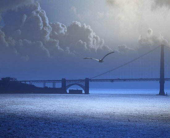 Pelican Over The San Francisco Bay by David Denny