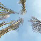 Dry Trees From Below by visualspectrum