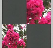 Crape Myrtle Blank Q6F0 by Christopher Johnson