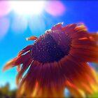 Here comes the sun by Sue Morgan