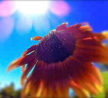 Sun + Flower by Sue Morgan