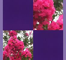 Crape Myrtle Blank Q9F0 by Christopher Johnson