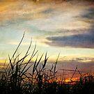 Bayou Sunset by Jonicool