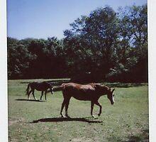 Horses by Zoilstar