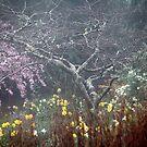Misty Spring Garden by Geoff Smith