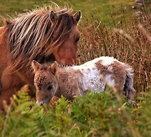 Beautiful Foal by CHINOIMAGES