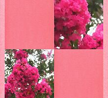 Crape Myrtle Blank Q11F0 by Christopher Johnson