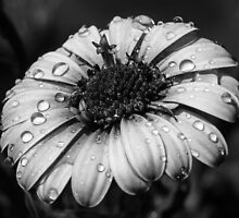 Flowerpower Double Black & White by Leigh Metzroth