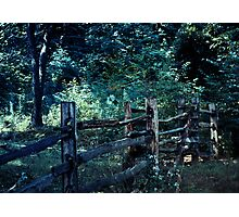 Forest Post Photographic Print