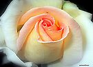 I Grow Misty............. by naturelover
