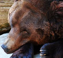 A Bears Life by Kerri  Crau