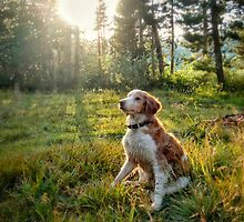 Sun Bathing Dog by JocelynVodnik