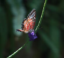 Natures wonder by animal73