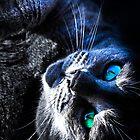 Russian Blue by LadyEloise