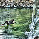 "Black swan by Antonello Incagnone ""incant"""