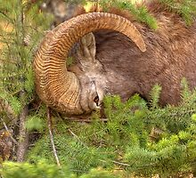 Logging...the Ram way by JamesA1