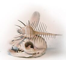 shell and skull. by AnjiMarth