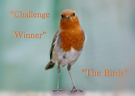BANNER - The Birds by AnnDixon