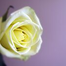 Focus on Pale Yellow Rose by Linda  Makiej