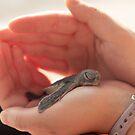 Green Sea Turtle (Chelonia mydas) Hatchling by dingobear