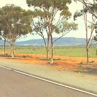 Trees in a row - Flinders Ranges by imaginethis