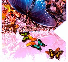 Butterfly stream by ♥⊱ B. Randi Bailey