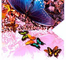Butterfly stream by ♥⊱ B. Randi Bailey