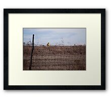 Meadowlark on Fence Framed Print