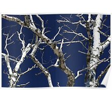 Dead Birch 1 Poster